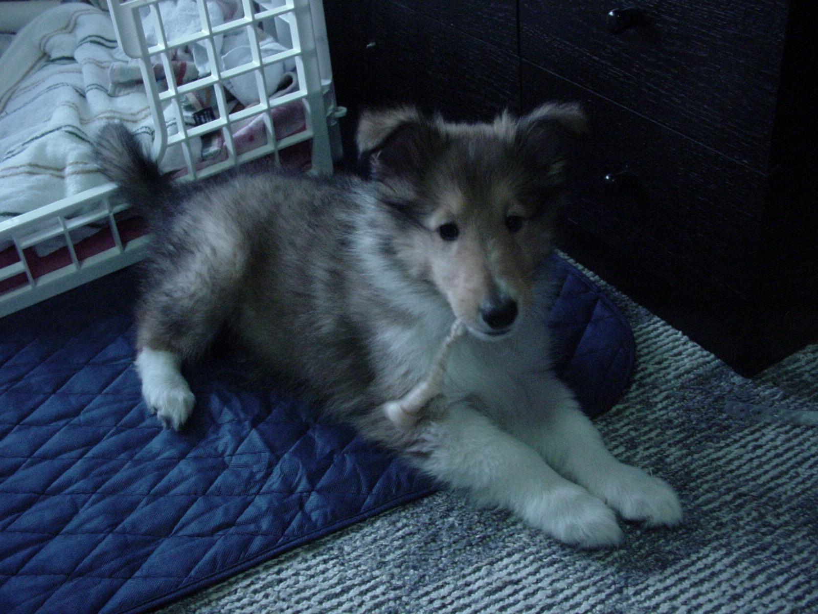 http://www.lucky-dog.jp/weblog/image/DSC00020.JPG
