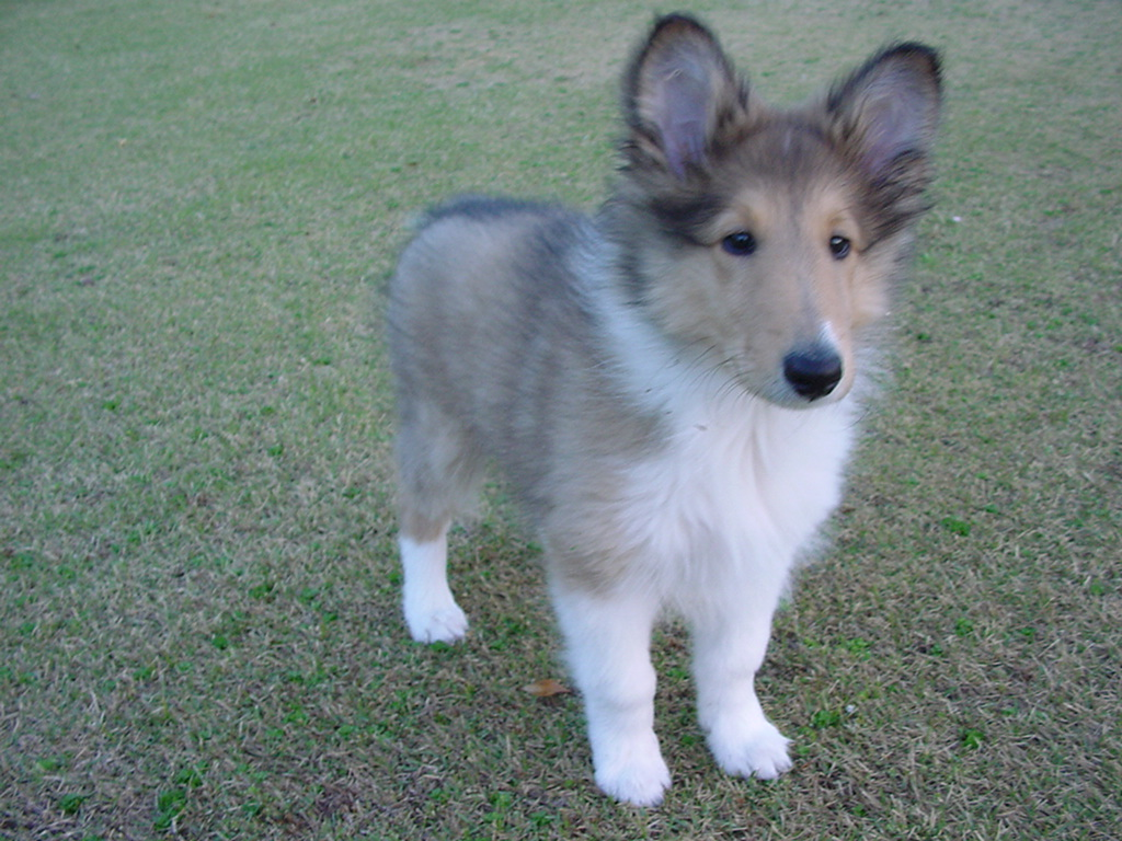 http://www.lucky-dog.jp/weblog/image/DSC00026.JPG