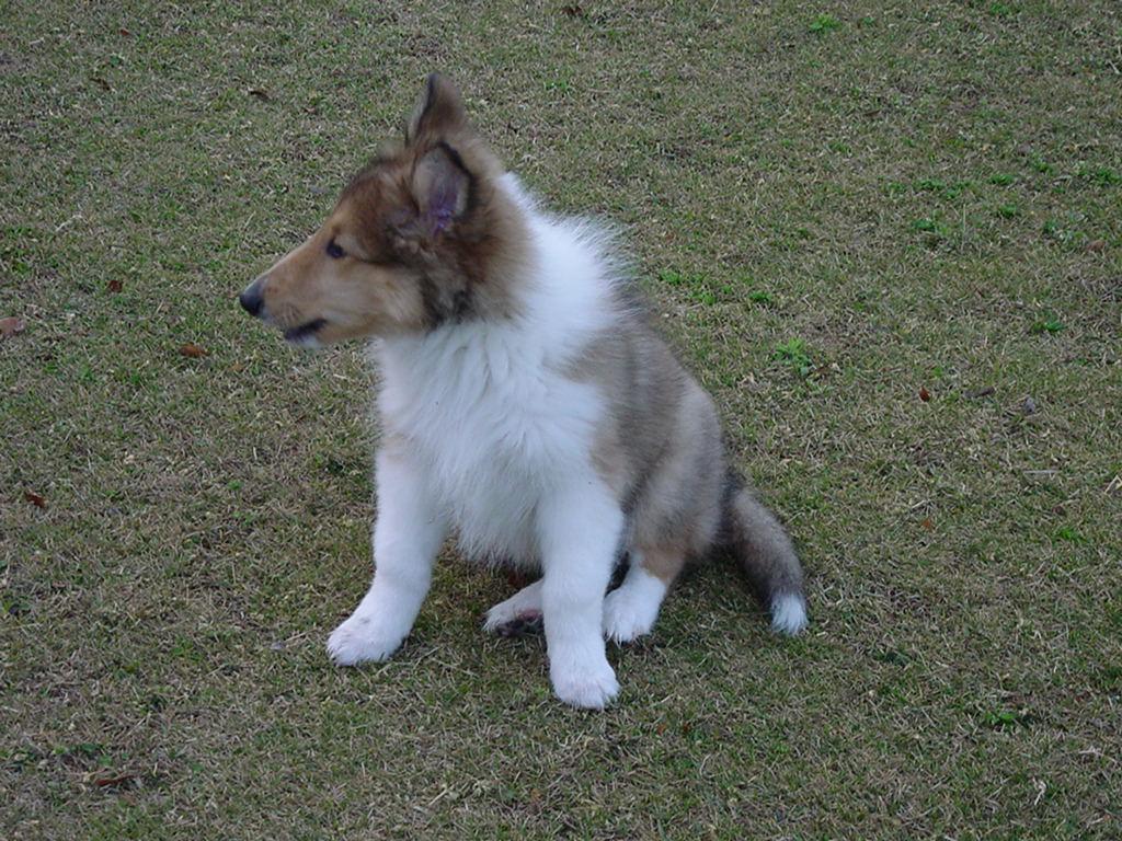 http://www.lucky-dog.jp/weblog/image/DSC00028.JPG