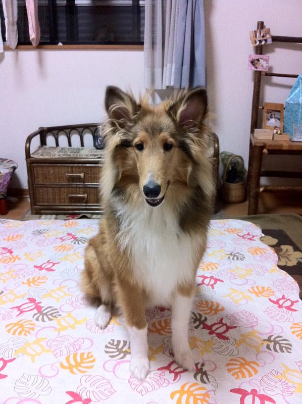 http://www.lucky-dog.jp/weblog/image/IMG_0020.jpg