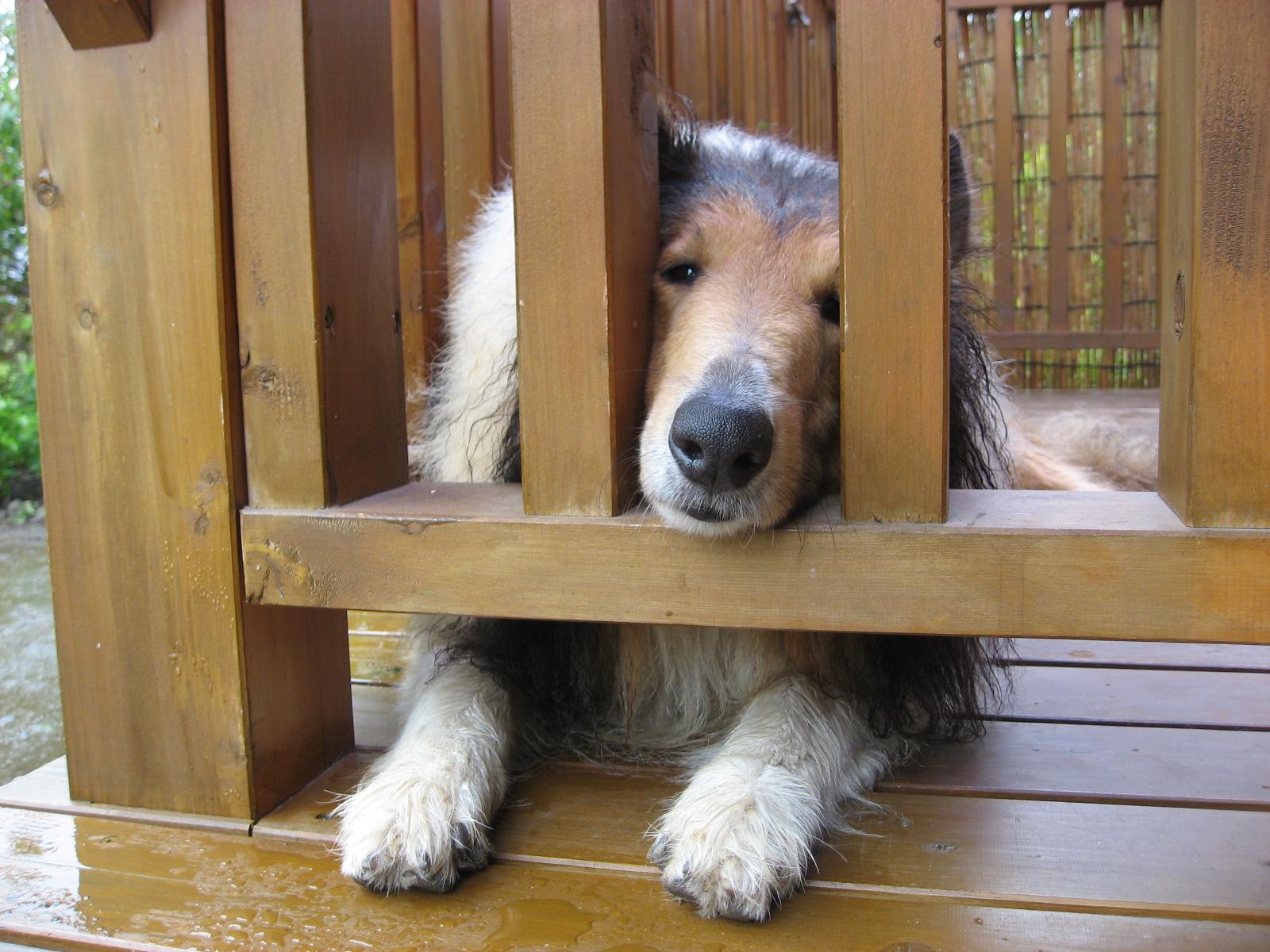 http://www.lucky-dog.jp/weblog/image/IMG_0951.JPG