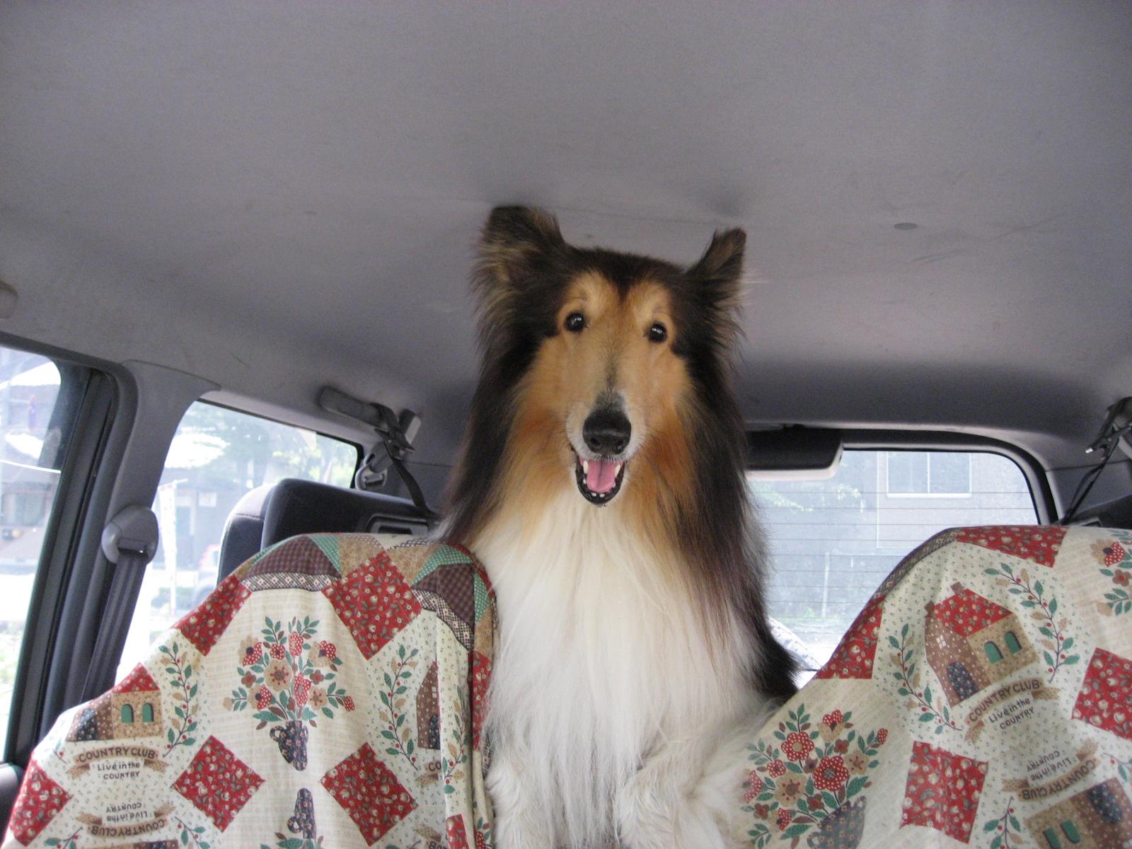 http://www.lucky-dog.jp/weblog/image/IMG_1246.JPG