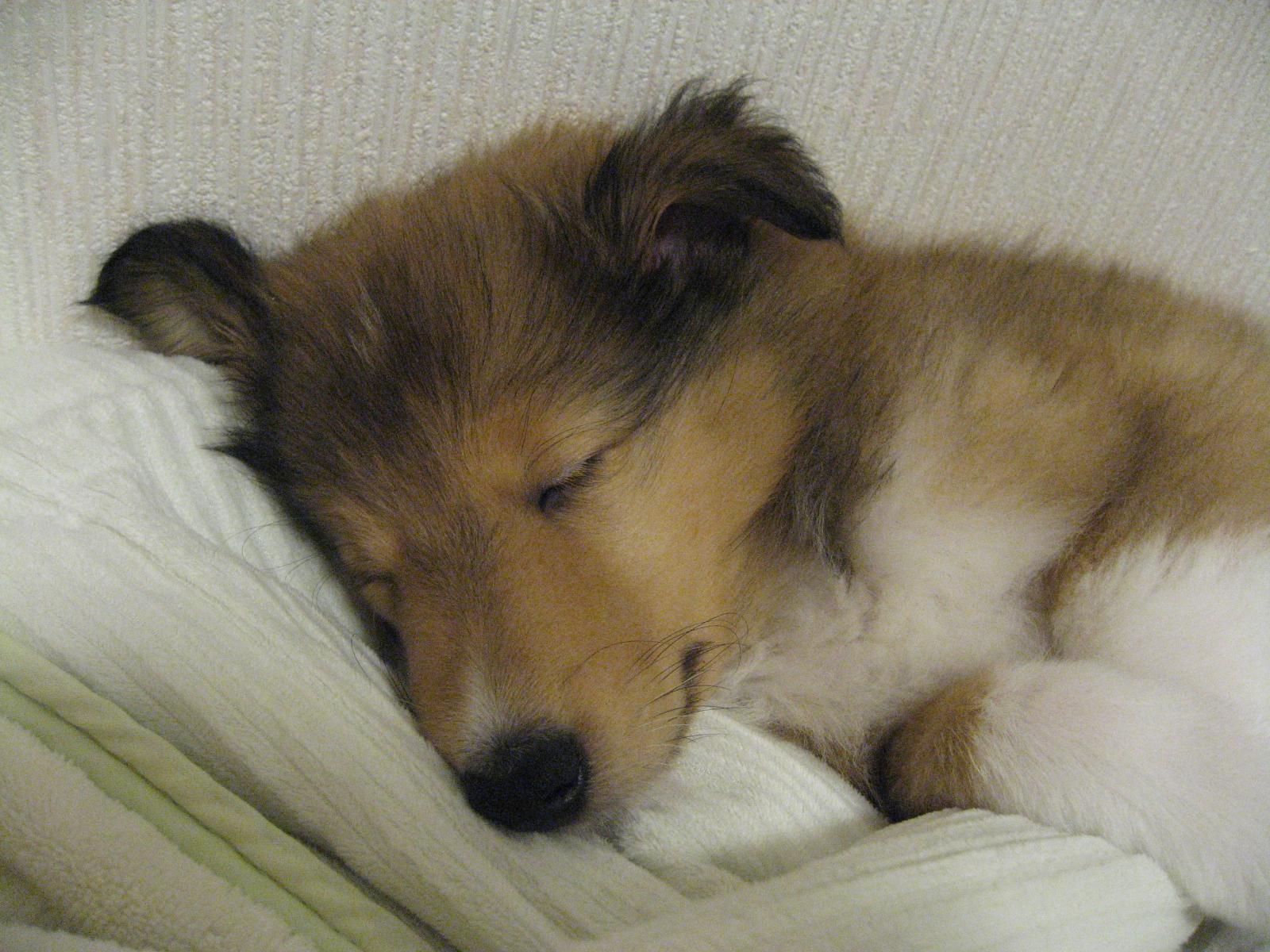 http://www.lucky-dog.jp/weblog/image/IMG_2370.JPG