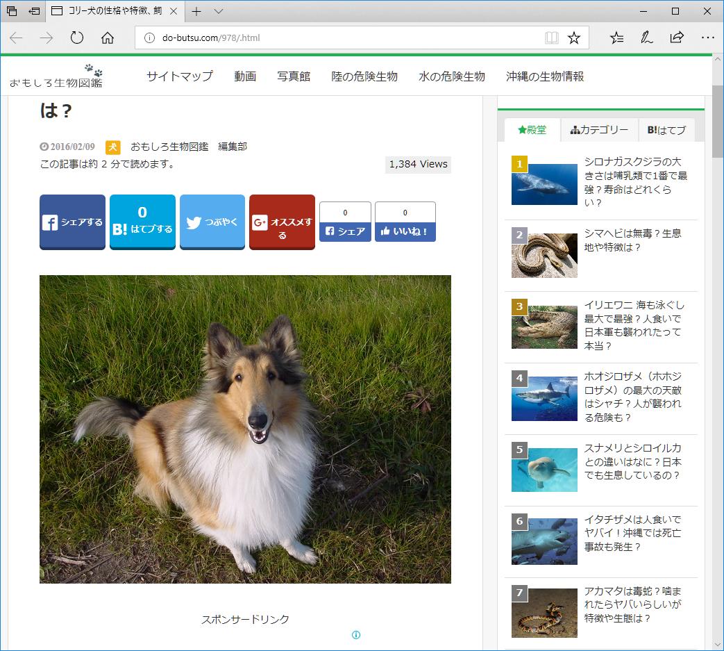 Google画像検索で表示された、先代コリー犬 ラッキー